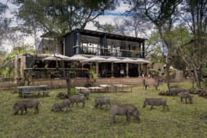 Warthogs and wildlife abound along our riverine setting